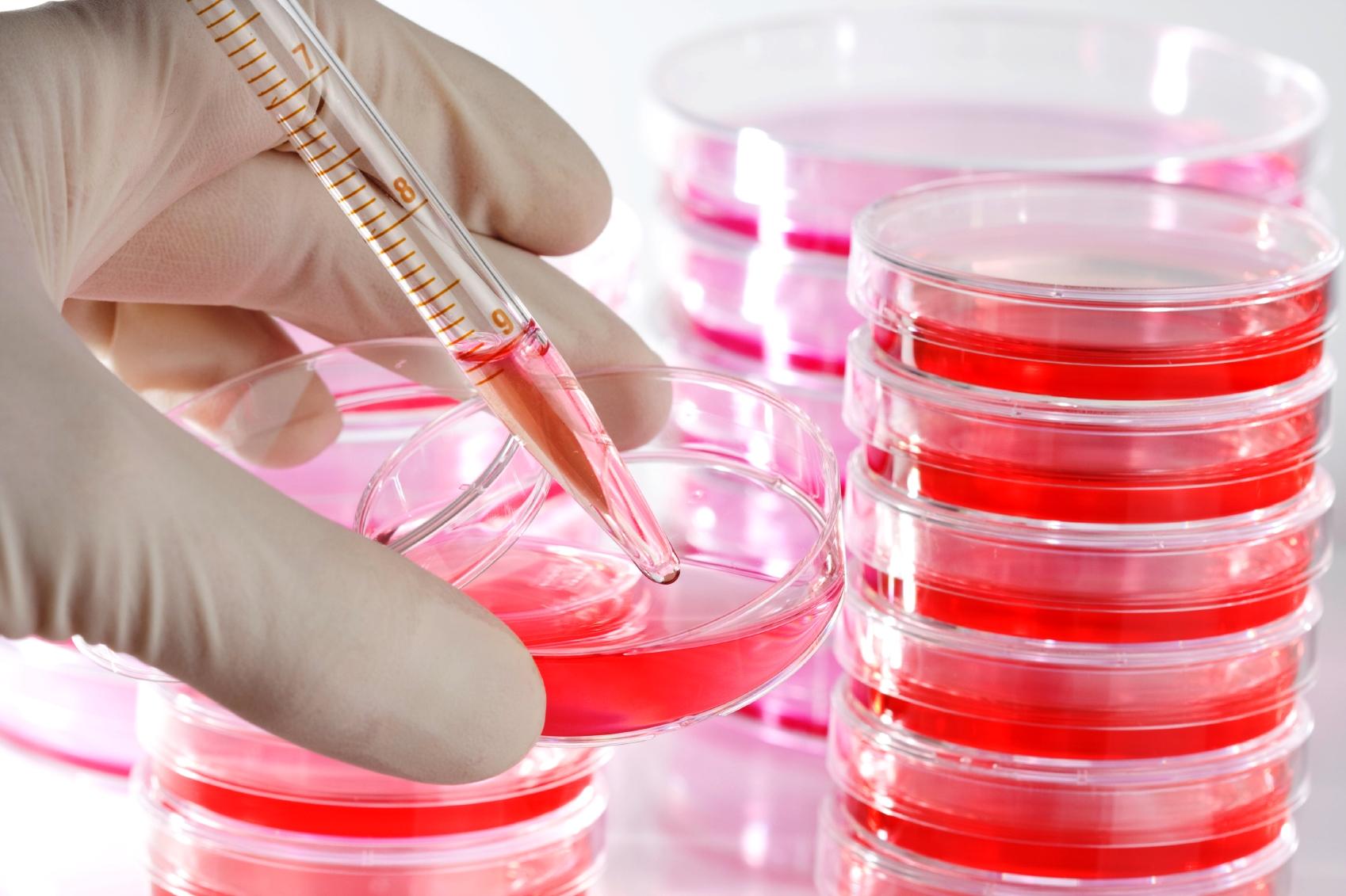 Šūnu kultūras - biežāk lietotie produkti
